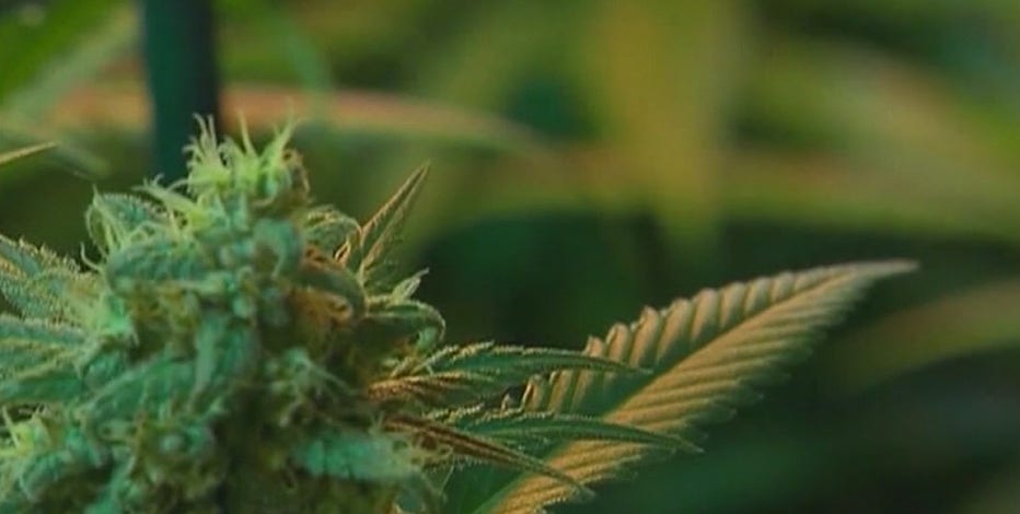 Report: Scottsdale approves measure that imposes restrictions on recreational marijuana