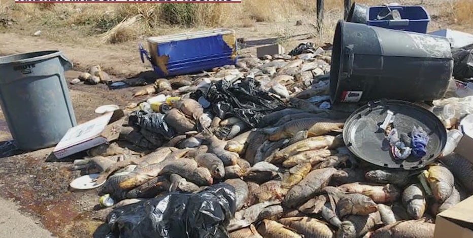 Man accused of dumping large pile of dead fish along Phoenix road