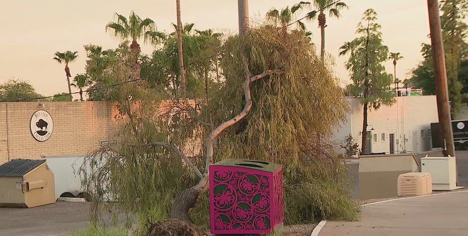 Cleanup efforts continue in Scottsdale following powerful monsoon storms