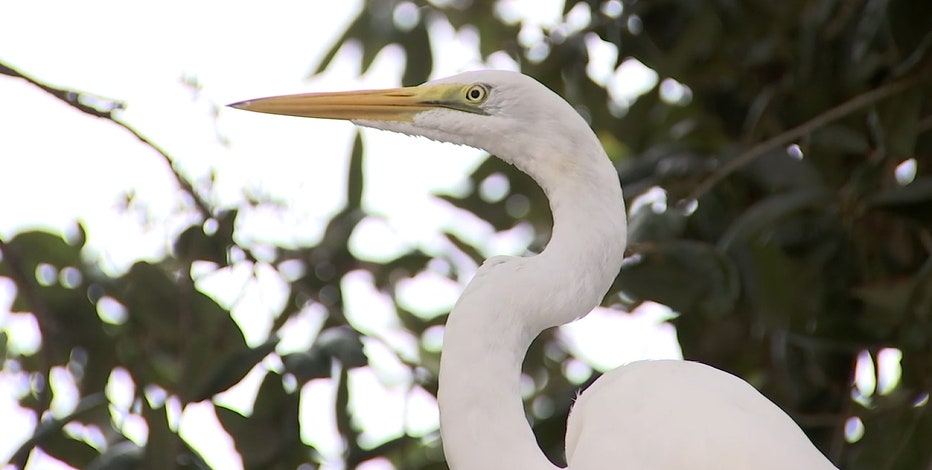 Seaside Seabird Sanctuary reports less donations, loss of volunteers during pandemic