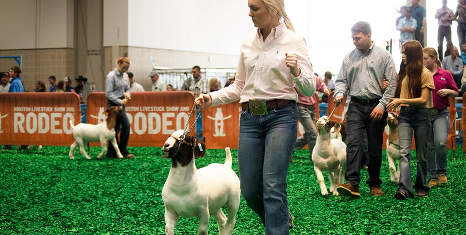 Youth to be focus of 2021 Houston Livestock Show and Rodeo