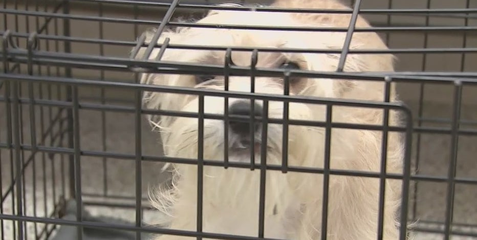 Houston Humane Society gives crates to pet owners with outdoor dogs due to arctic blast