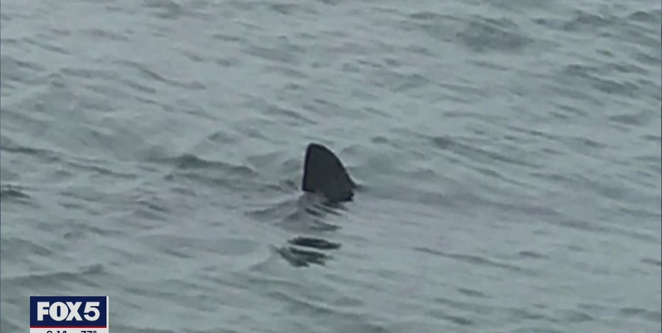 'Shark Patrol' teams monitoring waters off Long Island