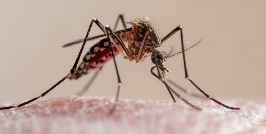 Mosquitos 'bad' in Wisconsin, Mosquito Squad sees increase in calls