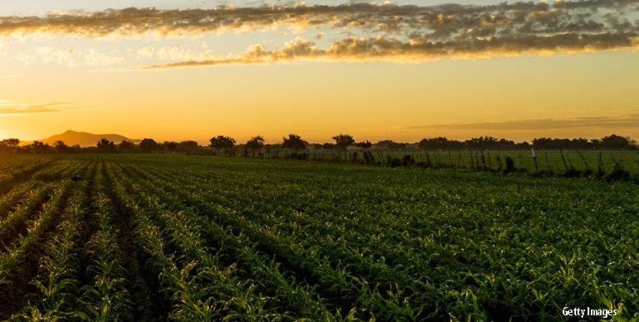 $50M to Wisconsin farmers, agriculture from fed COVID relief funding