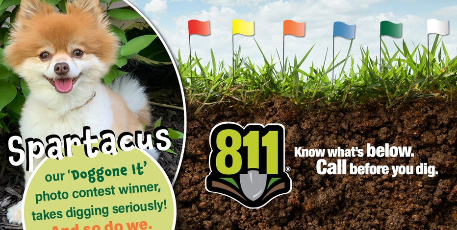 Call before you dig: Meet Spartacus, the 6-year-old Pomeranian named We Energies' 'ambassadog'
