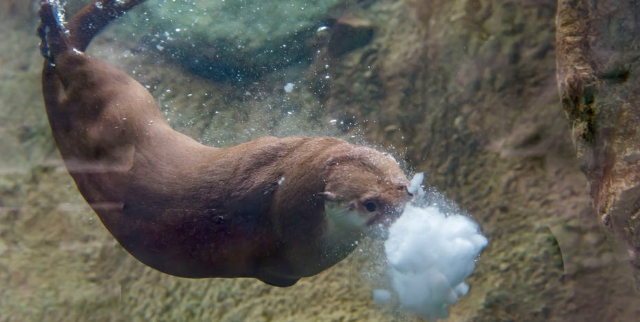 Milwaukee County Zoo offers free entry during Frosty Free Week