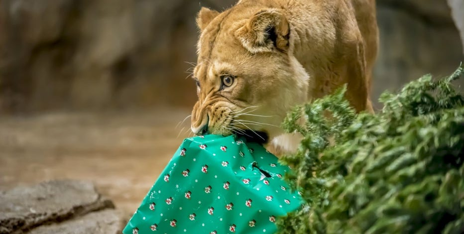Milwaukee County Zoo offers unique experience this holiday season