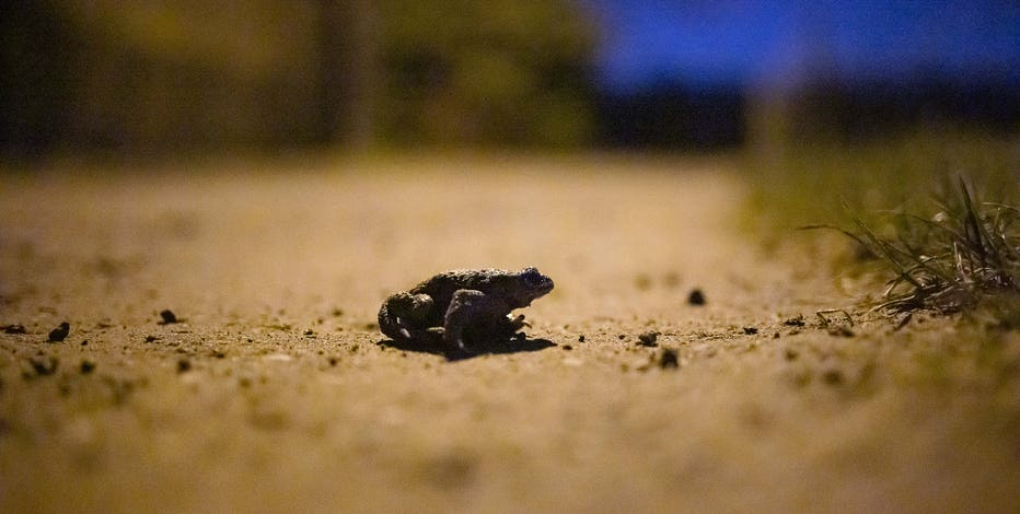 Wisconsin DNR seeks volunteers for frog call surveys