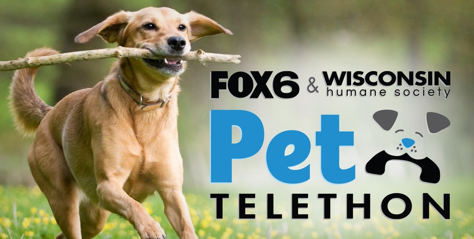 Cuteness alert! Watch the FOX6, Wisconsin Humane Society Pet Telethon