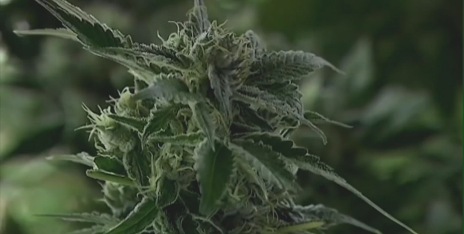 Gov. Evers cites revenue, reform in push to legalize marijuana