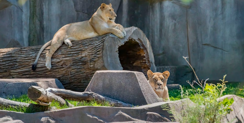 Moms receive free admission at Milwaukee County Zoo on Mother's Day