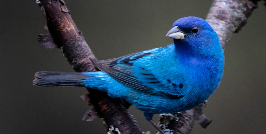 Wisconsin's migratory birds are back for summer