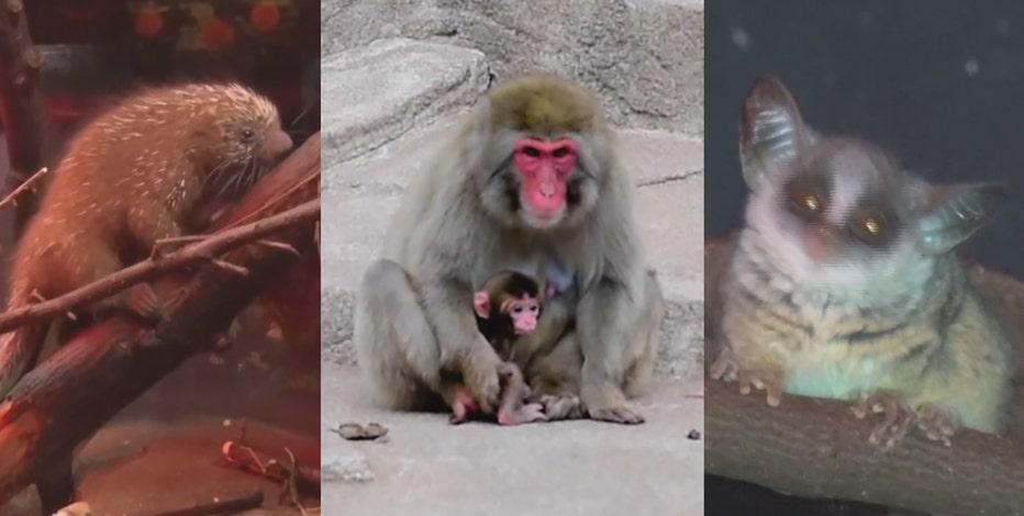 Milwaukee County Zoo's baby animal additions