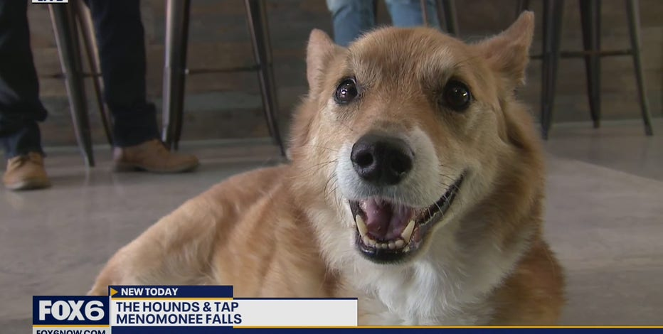 Have you ever wanted to take your dog to a bar? Now you can