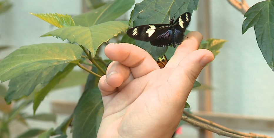 Milwaukee Public Museum Butterfly Wing reopens Aug. 19