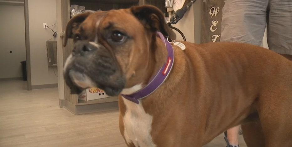 Pandemic pet surge has veterinarians busy
