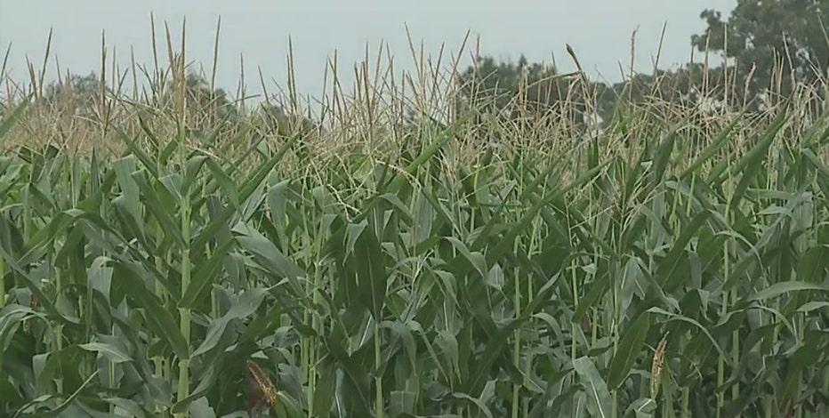 Evers proposes $25M Wisconsin agriculture package