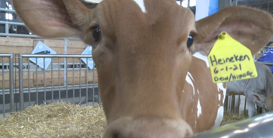 Wisconsin's dairy sector expansion project unveiled
