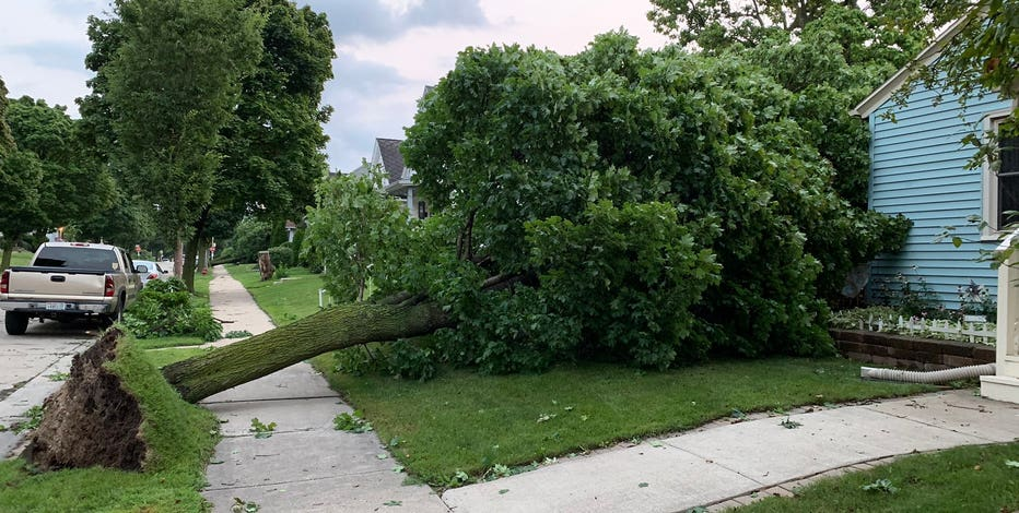 West Allis trees uprooted, Milwaukee's south side hit hard by storms