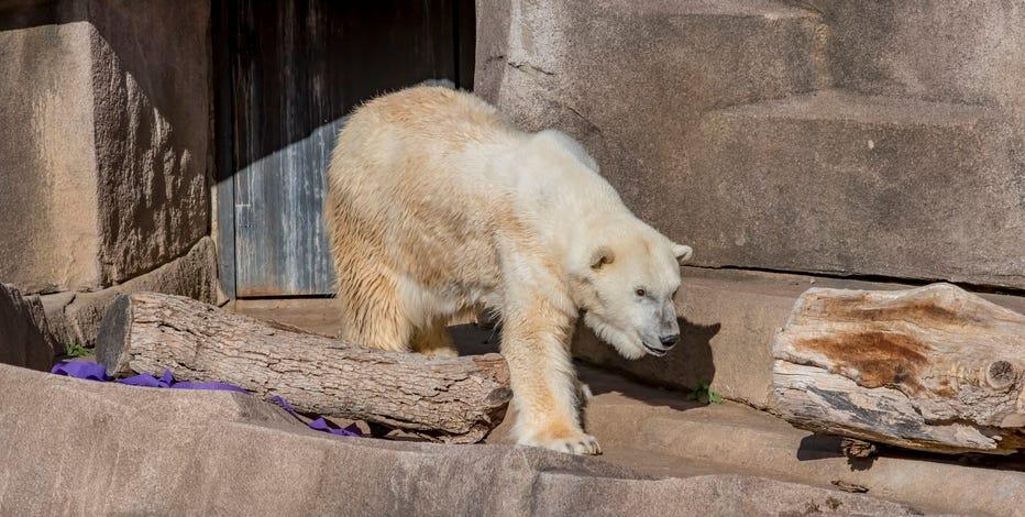 Milwaukee County Zoo polar bear dies at 36