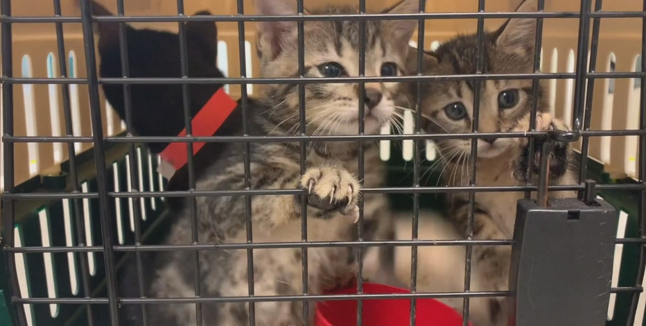 Pets rescued from hurricane arrive in Waukesha