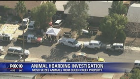 Animal hoarding investigation: MCSO seizes 15 dogs from Queen Creek property