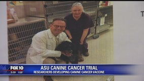 Canine cancer vaccine trial begins at ASU