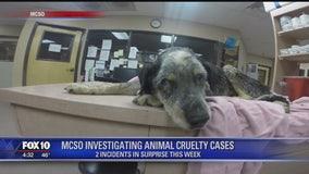 Deputies find 2 separate cases of animal cruelty in Surprise
