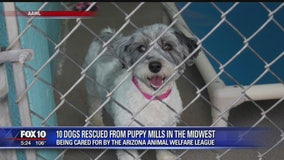 10 dogs rescued from puppy mills now in Arizona