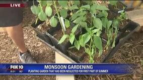 Gardening during the monsoon