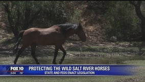 State, feds reach agreement on Salt River horses protection