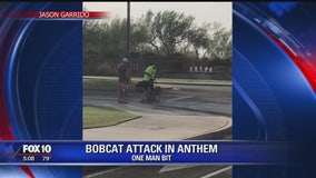 Bobcat killed after attacking 2 men, dog in Anthem