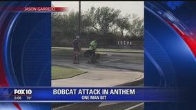 Bobcat killed after attacking 2 men, dog in Anthem