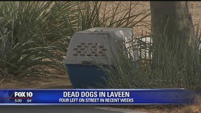 Dogs found dead in crates on side of Laveen street