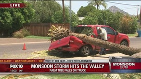 Palm tree falls on truck during monsoon storm
