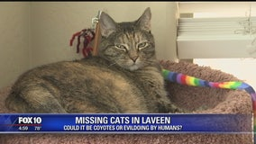 WHAT HAPPENED? Cats disappearing from Laveen neighborhood