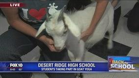 Goat Yoga at Desert Ridge High School
