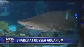 OdySea Aquarium unveils new shark exhibit