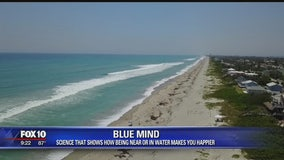 Blue Mind: Science that shows how being near or in water makes you happier