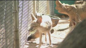 Southwest Wildlife food supply running low since policy change, in need of donations