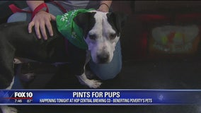 Pints for Pups: Valley non-profit helping homeless dogs