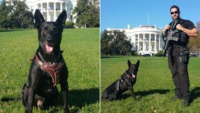 Ex-Secret Service dog credited with saving Obama from White House intruder to receive British award