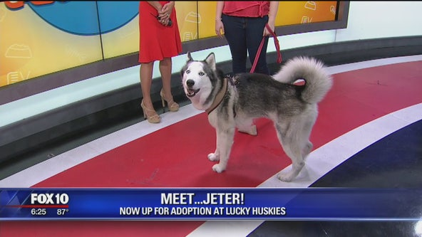 Pet of the Week: Jeter the Husky
