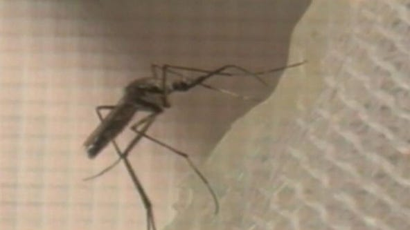 Mosquitoes test positive for West Nile in Coconino County