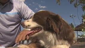 Queen Creek family reunited with dog after nine months