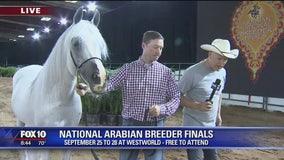 Cory's Corner: Scottsdale Arabian Horse Show