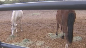 Sheriff's Office: 4 horses found dead, 9 emaciated on property near Winslow