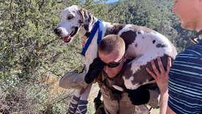 Crews rescue Great Dane from Arizona canyon