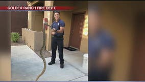 Slithering 6-ft long visitor found at home near Marana